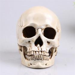 Crâne en résine réaliste grand modèle